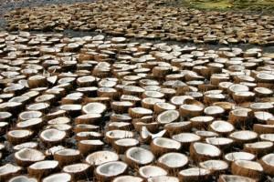 высушивание кокоса